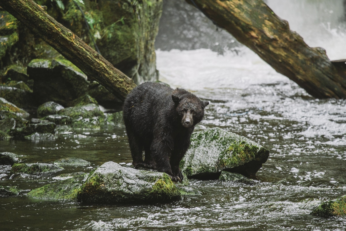ucluelet airbnb management